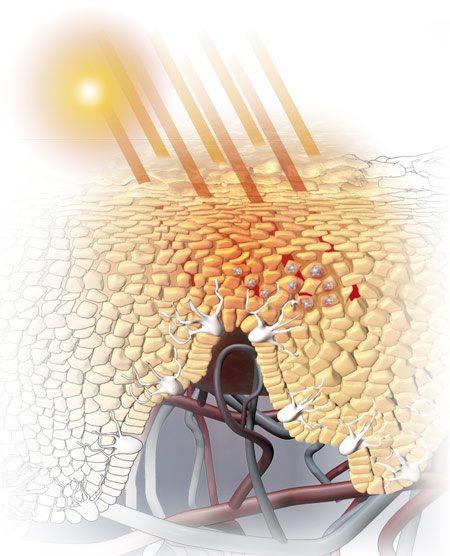 الأشعة تحت الحمراء الوقوف في الشمس دباغة سرير مع مصابيح الأشعة فوق البنفسجية